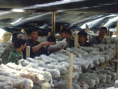 涉农专业学生在蘑菇大棚实习